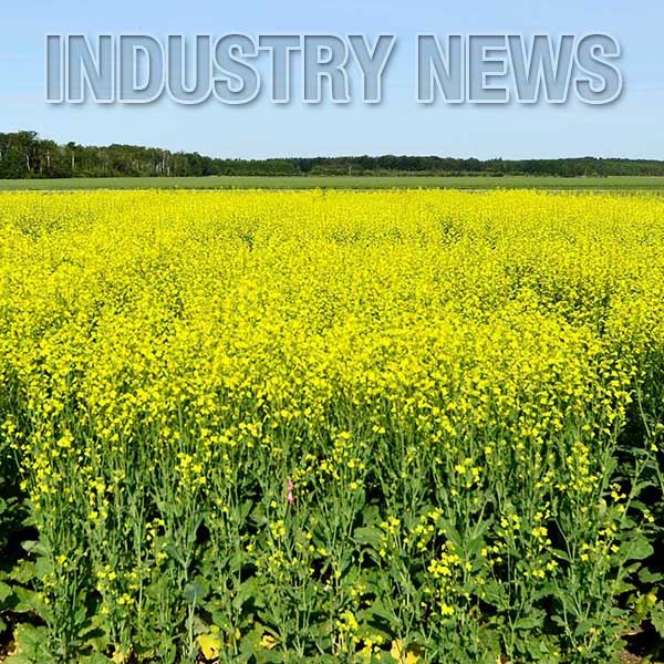 Canola Industry News